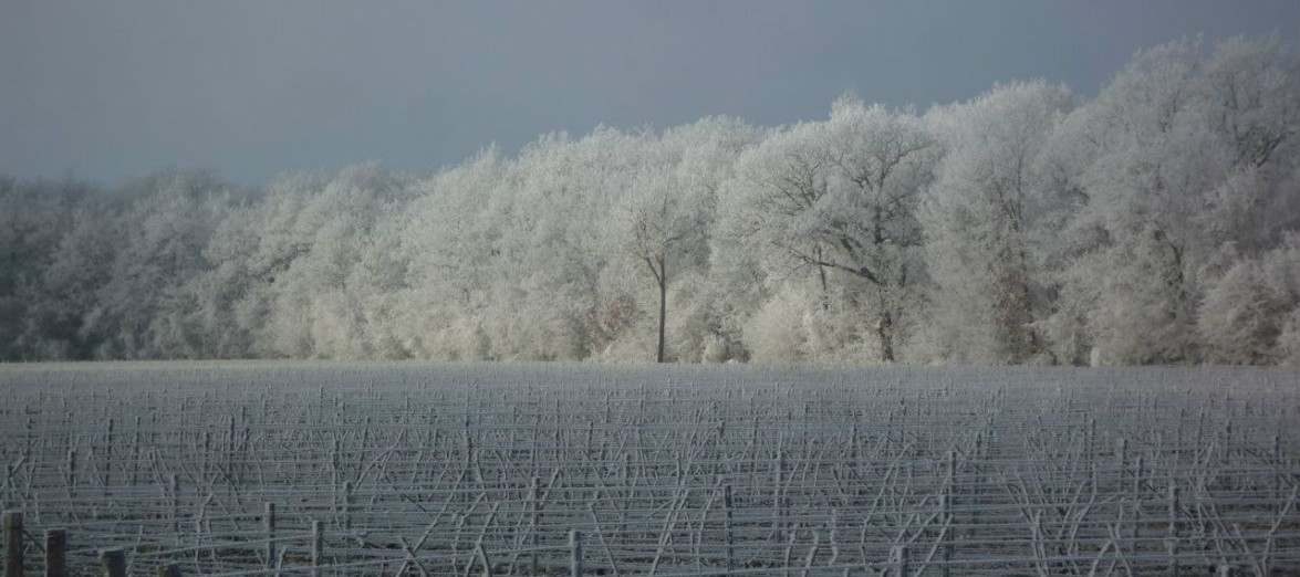 chablis-in-winter-2-1175